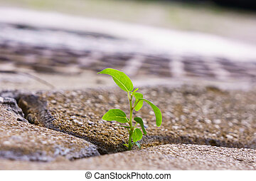 young plant grow between bricks