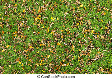 leaf fall on the grass