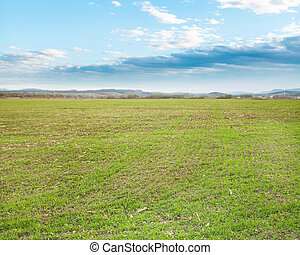 agricultural field with green grass in early spring evening