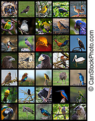 Birds - Collage made of images different birds of the world