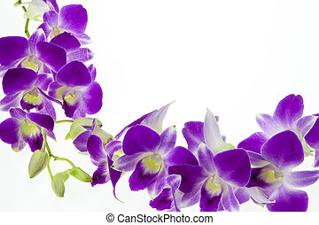 purple orchid isolated on white background.