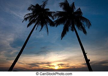 Twin Palm tree sunset on tropical beach