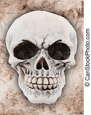 human skull on a dirty background