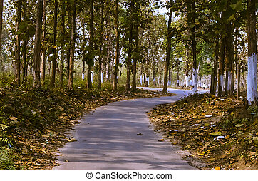 Winding road through fall forest in India