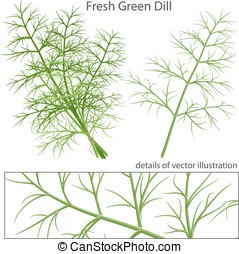 Fresh and green dill - Green fresh dill Vector illustration...