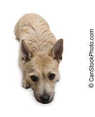 Dog - Looking at You