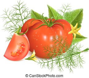 Red ripe tomatoes with dill Vector illustration