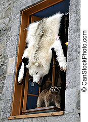 White wolf and racoon - White wolf fur and racoon for sale