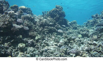 Coral and fish in the Red SeaEgypt