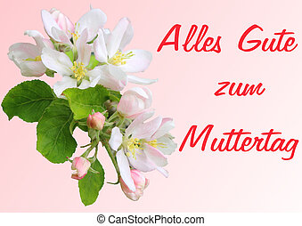 Apple blossom branch with Mothers Day greetings in German -...