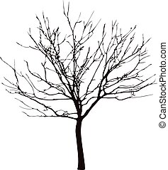 a barren tree on a white background