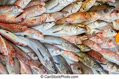 Grupo of fresh fishes displayed in market - Bunch of fresh...