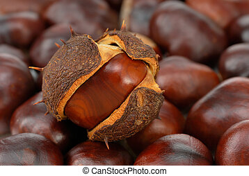 Chestnuts covering the frame - A group of chestnuts, one of...