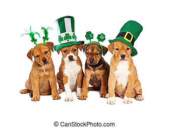 Large St Patricks Day Dog - Adorable eight week old mixed...