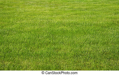 Spring Summer Lawncare - Green grass lawn with sunny and...