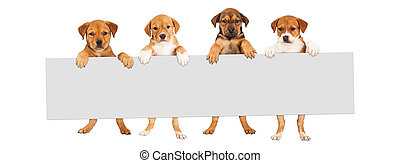 Puppies Hanging Over Banner - Four mixed Shepherd breed...