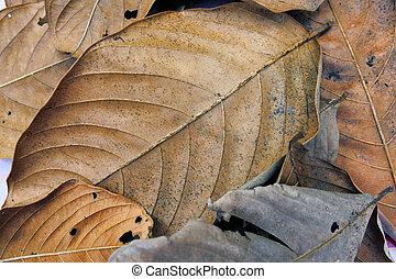 Dry leafs.