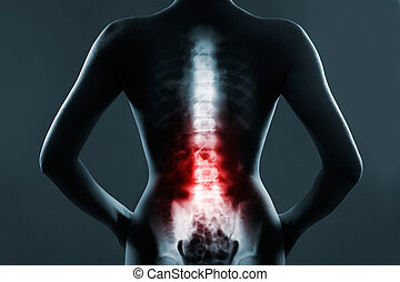 The lumbar spine is highlighted by red colour - Human spine...