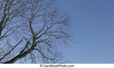 Branches swaying in the wind - Branches of a tree without...