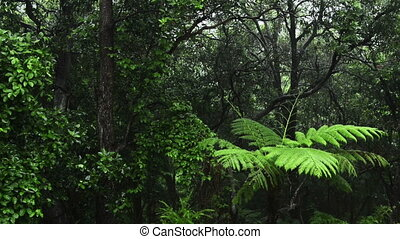 Jungle Rain - Lush green jungle with heavy rain falling on...