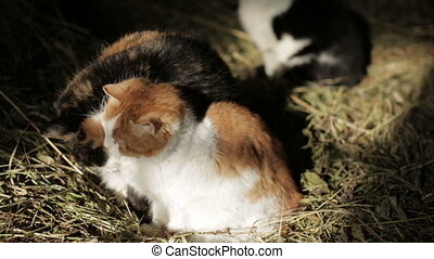 Cats in the hay - Cats are clean in the hayloft