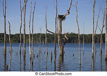 Dead Trees Manasquan Reservoir