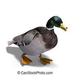 male duck mallard - 3D rendering with clipping path and...