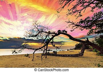Masoala sunset art - Beautiful stacked timelapse image of a...
