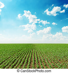 spring green field and blue sky with white clouds