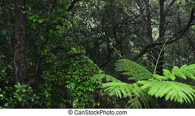 Rainforest Rain