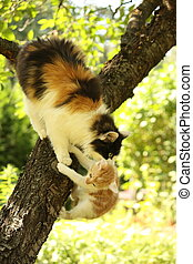 Mother cat climbing cat with her kitten - Mother cat...