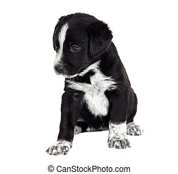 Seated puppy dog isolated over white background