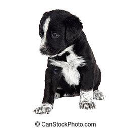 sentada, Filhote cachorro, cão