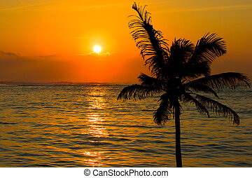 Tropical sunset scene with palm