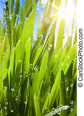 natural spring green background
