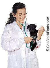 séduisant, dame, vétérinaire