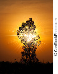 magical sunset with tree and sun ray