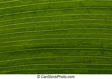 Leaf - Clouseup picture on a fresh leaf with symmetrical...