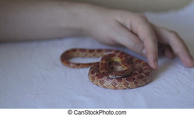 Hand touch the snake - A man touches a snake