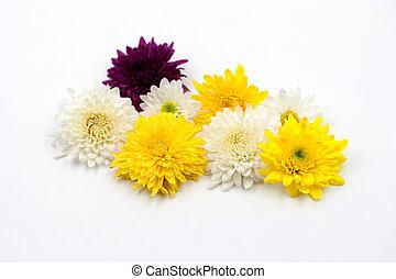 arrangement flower on white background