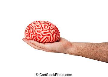 human, borracha, cérebro, em, Um, mão,