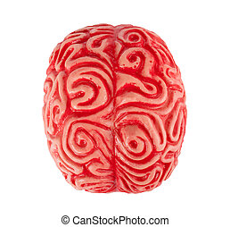 Human rubber brain isolated on white background.