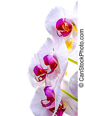 Orchid Flowers - Up close view of the flowers of an orchid...