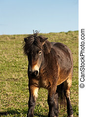Bad hair day - Adorable cute brown shaggy Horse or Pony in...