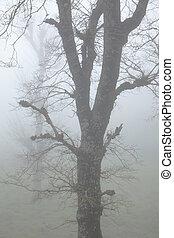 Inland Gran Canaria, fog at Las Montanetas