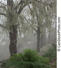 Inland Gran Canaria, fog at Las Montanetas, spooky...