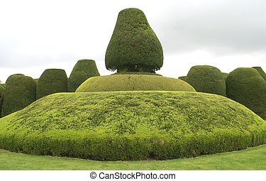 yew topiary - topiary tree