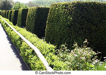 yew topiary - trees in a garden