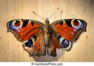 Butterfly (peacock eye) on wood in top view - Schmetterling,...