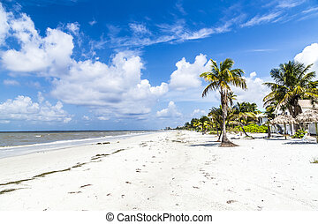 beach at Fort Myers in america - beautiful beach at Fort...